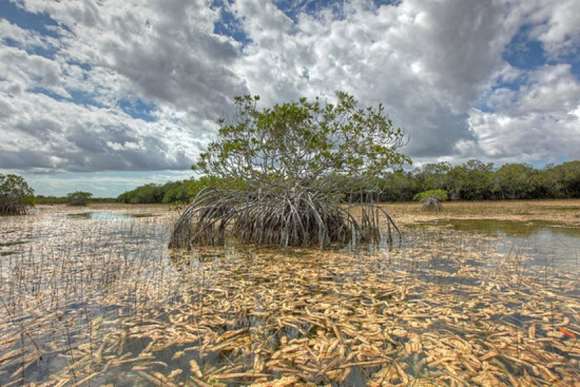 20160506_FloridaBay_img3_Mangrove-and-Pe